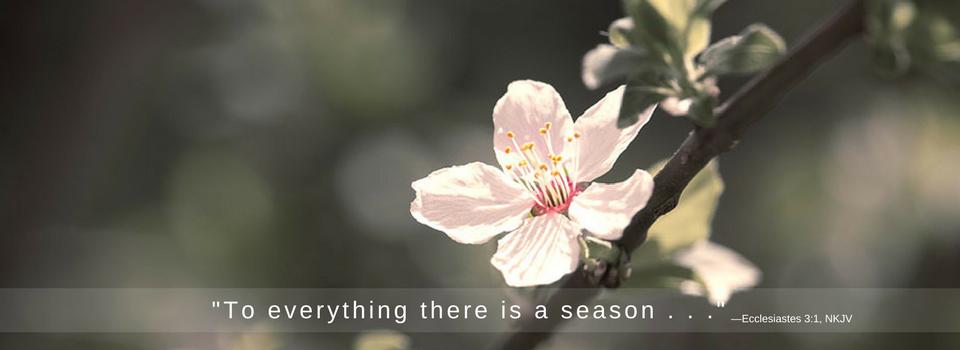 apple_blossom_2_96-x350