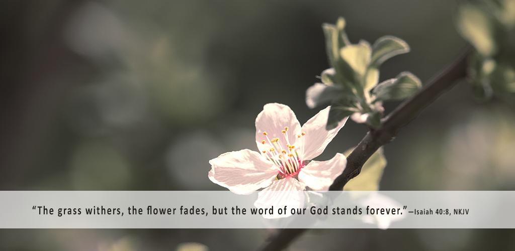 flower_1024x500